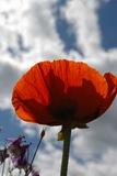 En annan blomma växandes mot skyn